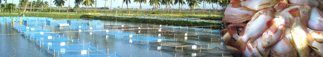 The Marine Products Exports Development Authority (MPEDA)